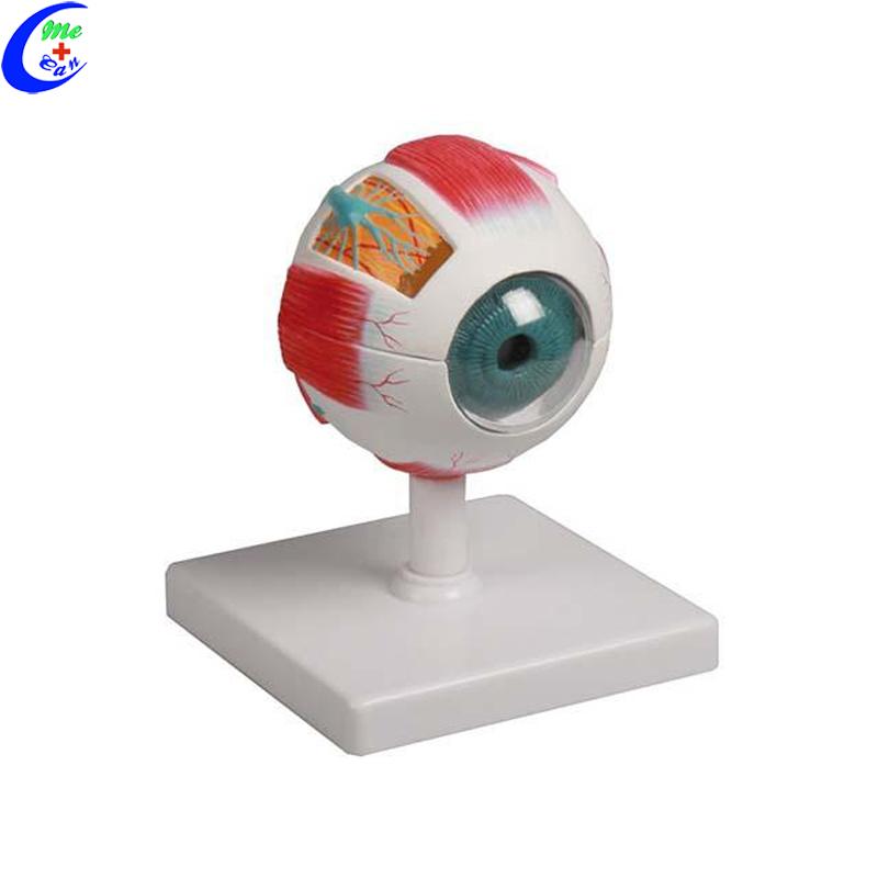 model eye.jpg