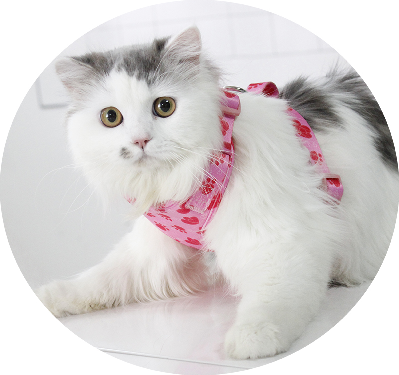 Harnais pour chat doux et respirant personnalisé d'usine QQPETS