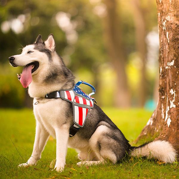 Arnés de masaje para perros: arnés de masaje para perros cómodo al por mayor