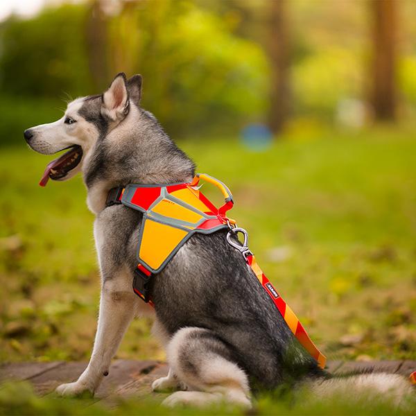 Adjustable dog massage harness: high-quality PU dog massage harness