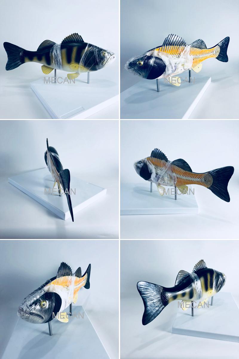 fish model.jpg