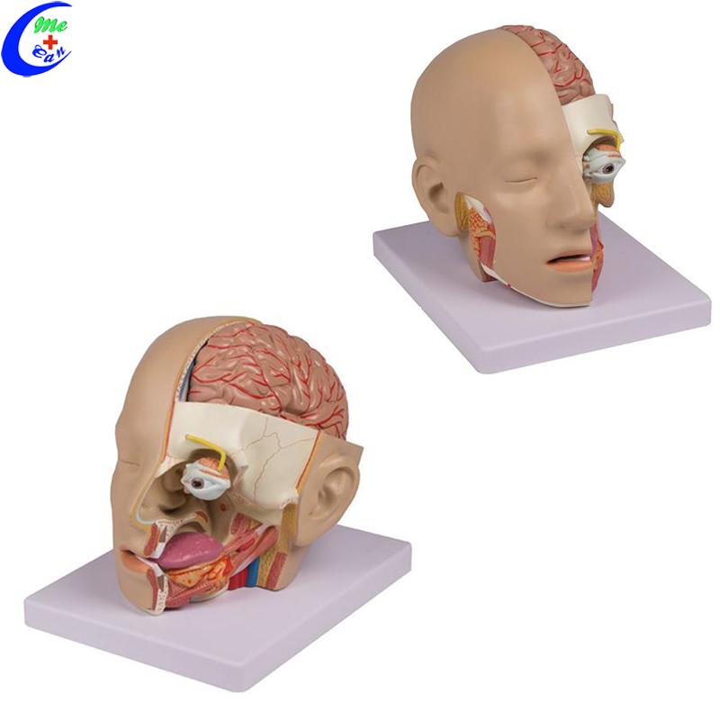 brain model 3d .jpg