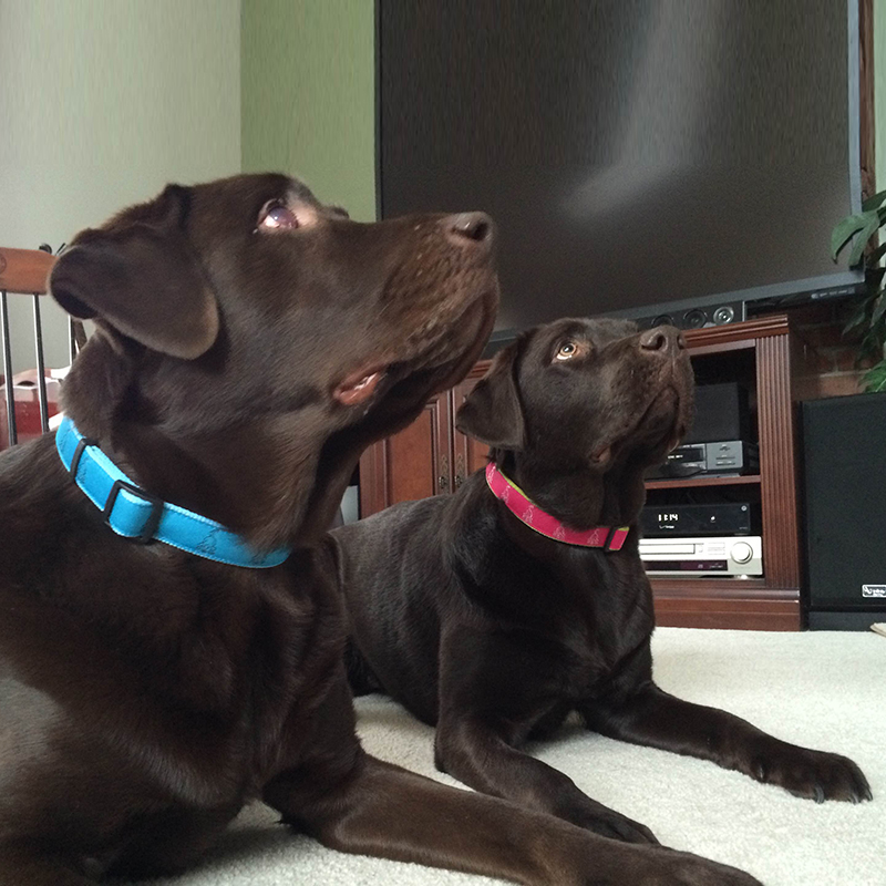 Dog Collars Factory Supplies: How many kinds of dog collars products by QQpets?