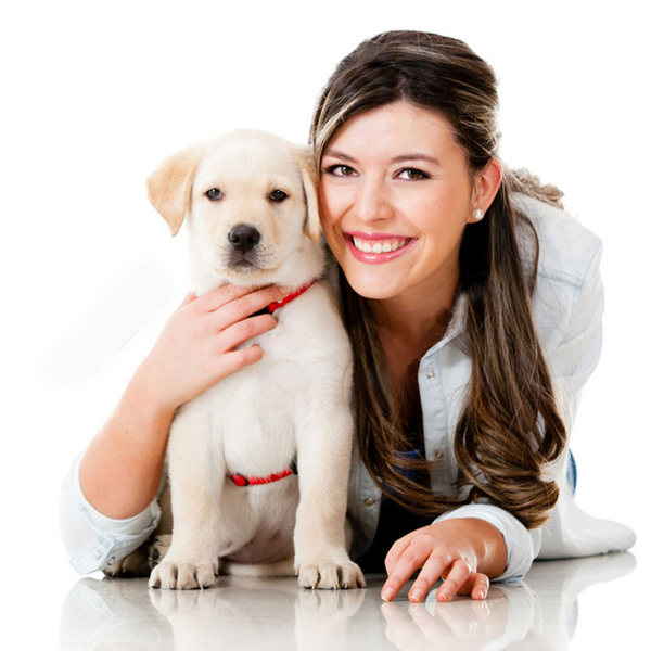 Why my dog bite its dog collar? How can I do to stop it?-qqpets