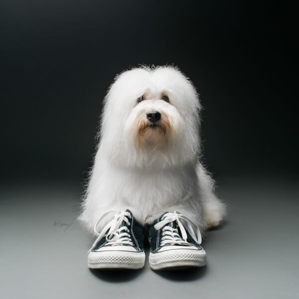 Do you think dogs need to wear shoes?-QQPETS