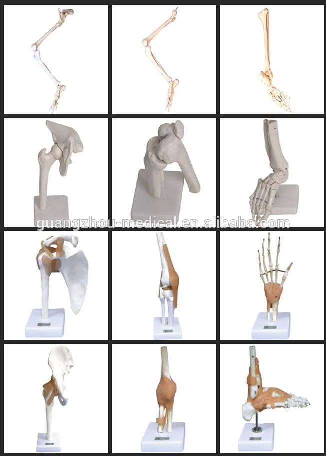 180cm Artificial human body model