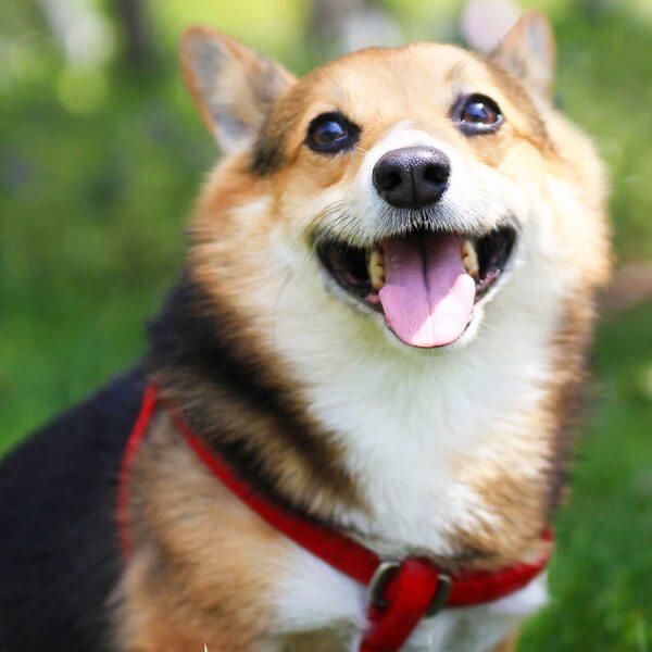 OEM collares para perros correas arneses-qqpets fábrica de productos para mascotas