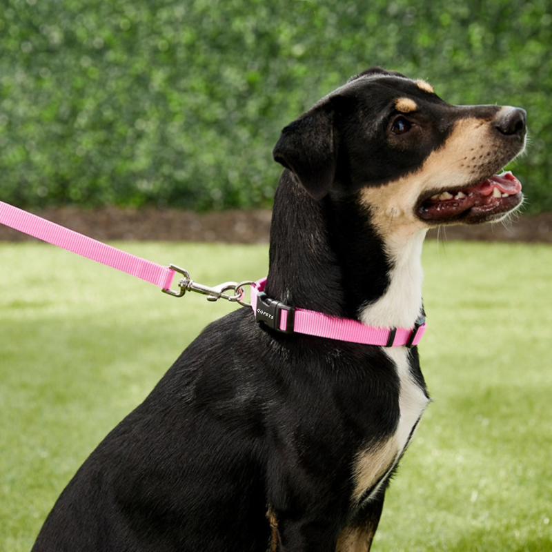 Solid Nylon Dog Leash And Collar