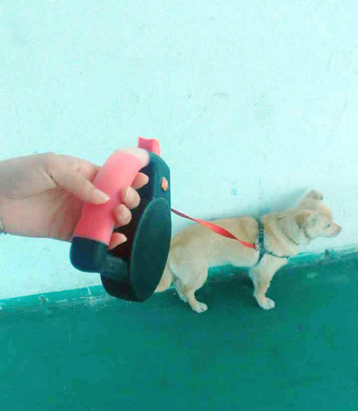 ¿Cómo utilizar correctamente la correa para perros retráctil con la operación de video-QQpets?